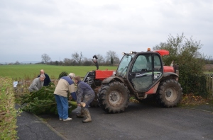 Tree delivery